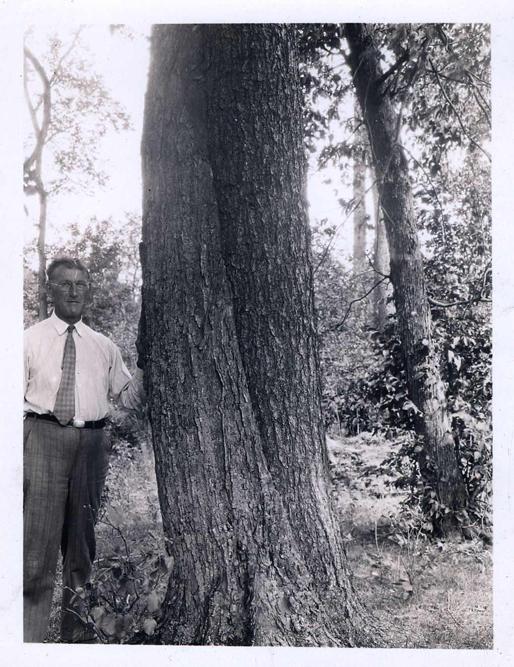 Frank Schantz and a double tree