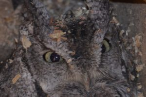 WRN Teens – Owl Prowl