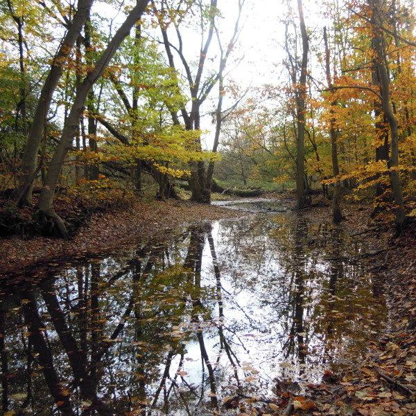 F.H. Montgomery Wildlife Sanctuary