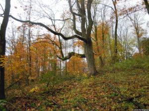 Sandhills Woods