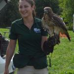 Wild Ontario with hawk