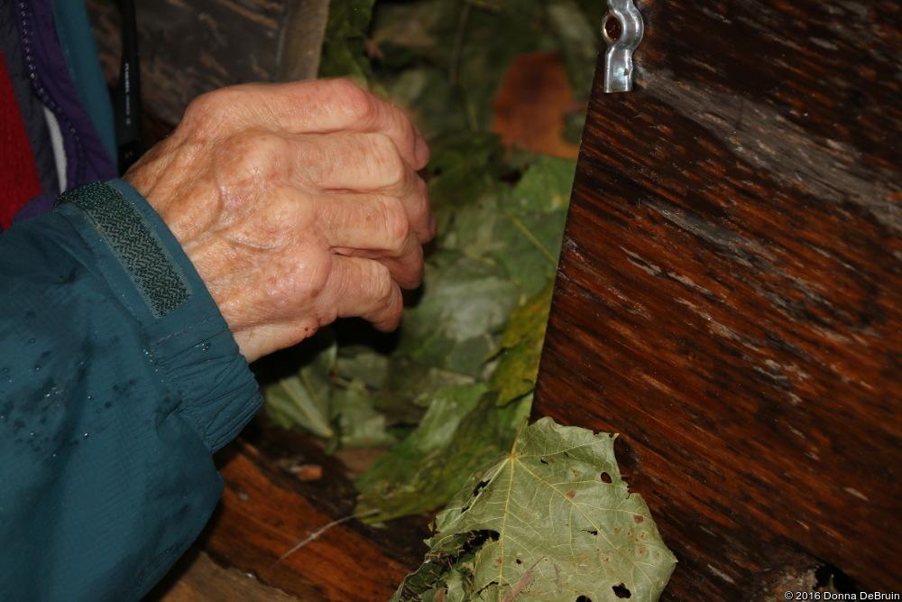 Leaves in Wood Duck box