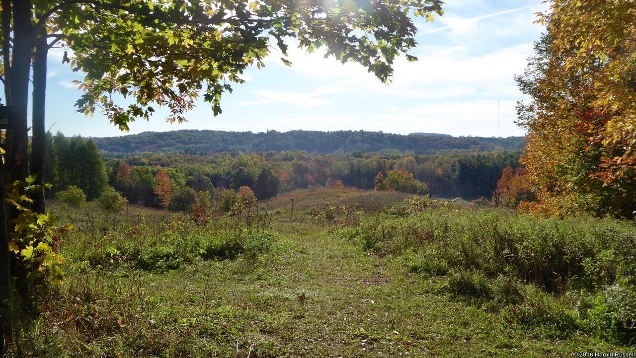 Schneider's Woods