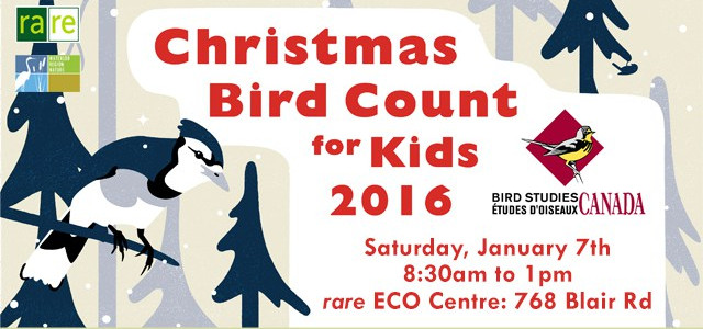 Christmas Bird Count for Kids 2016