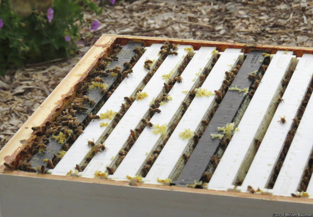 Frames in bee hive