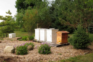 The Importance of Honey Bee Pollination