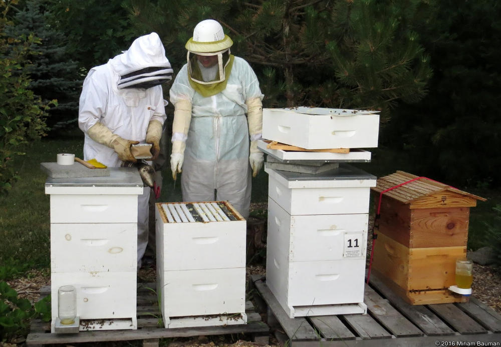 Inspecting Hives