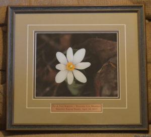 Honorary Life Membership Award