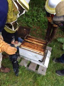 Laurel Creek Nature Centre Bee Hives