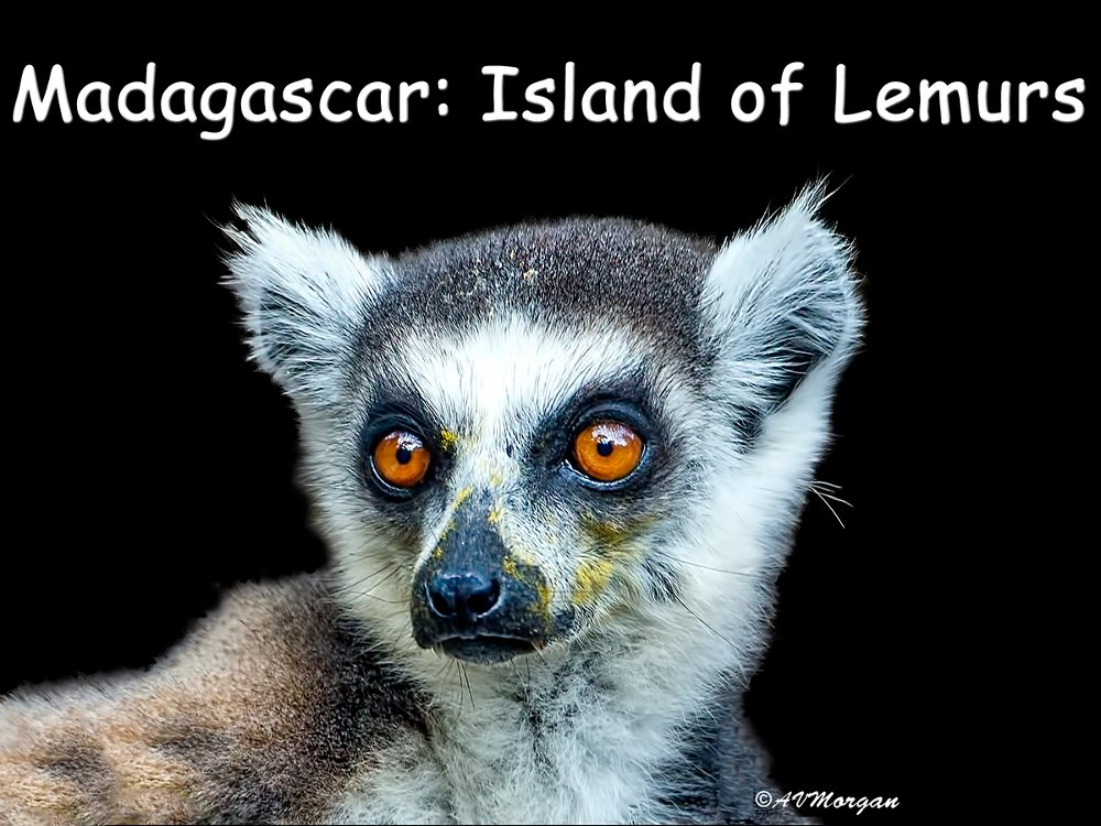 Madagascar: Island of Lemurs