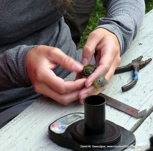 SpruceHaven Bird Banding