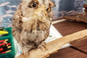 WRN Kids – Owl Prowl