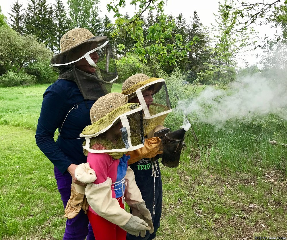 WRN Kids — Bee Hives
