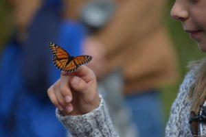 WRN Kids – Monarch Migration and Bug Hunt