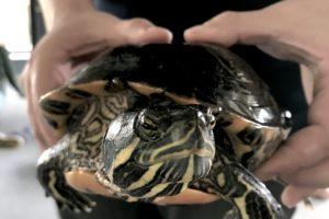 WRN Teens – Turtle Nesting Area