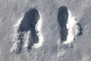 WRN Kids – Winter Tracking