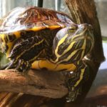 WRN Kids – Turtles