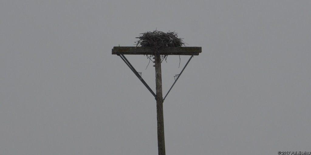 Osprey nest at Snyder's Flats