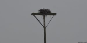 Osprey nest at Snyder's Flats