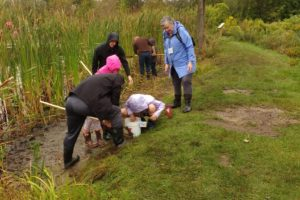 WRN Kids – Pond Study
