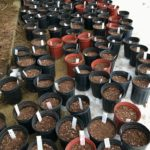 WRN Teens – Native seed cleaning and planting