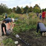 WRN Teens: Gardening for Pollinators